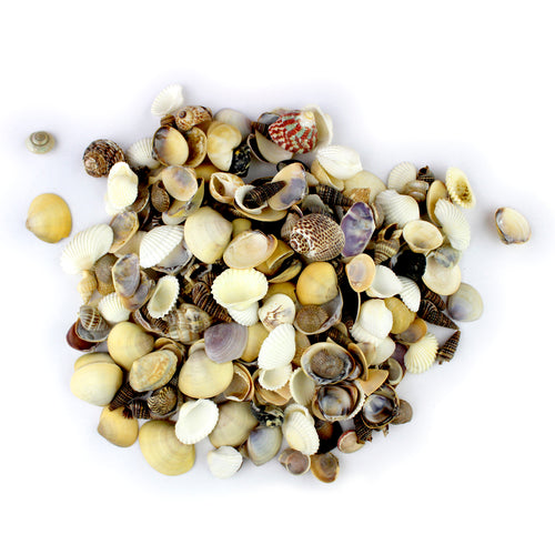 Tiny Indian Ocean Natural Sea Shells Mix - 1 lb