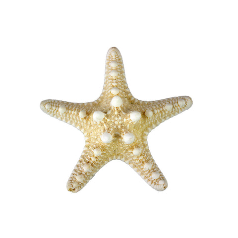 "Natural Knobby Starfish 1""-2"""