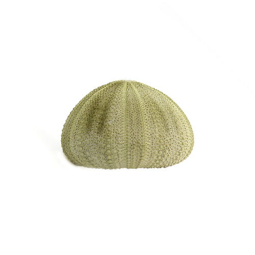 Green Sea Urchin Shell (2