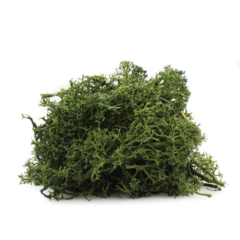 2 oz. Forest Green Reindeer Moss