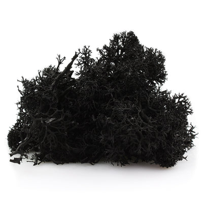 Black reindeer moss for terrariums and fairy gardens