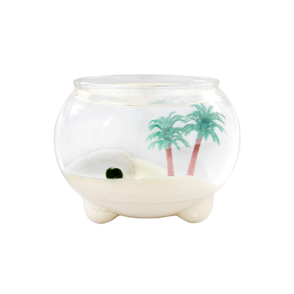 Marimo Ball Underwater Oasis Terrarium With Three Bubble Legs