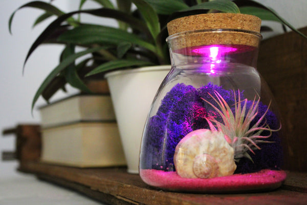 Conical Glass Terrarium w/ LED Lighted Cork