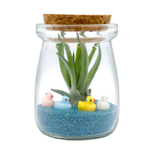 Ducks in a Row Miniature Air Plant Terrarium
