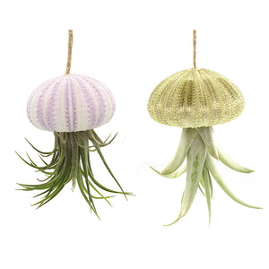 Hanging Tillandsia Jellyfish