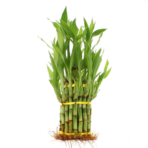 Three Tiered Tower Lucky Bamboo Arrangement
