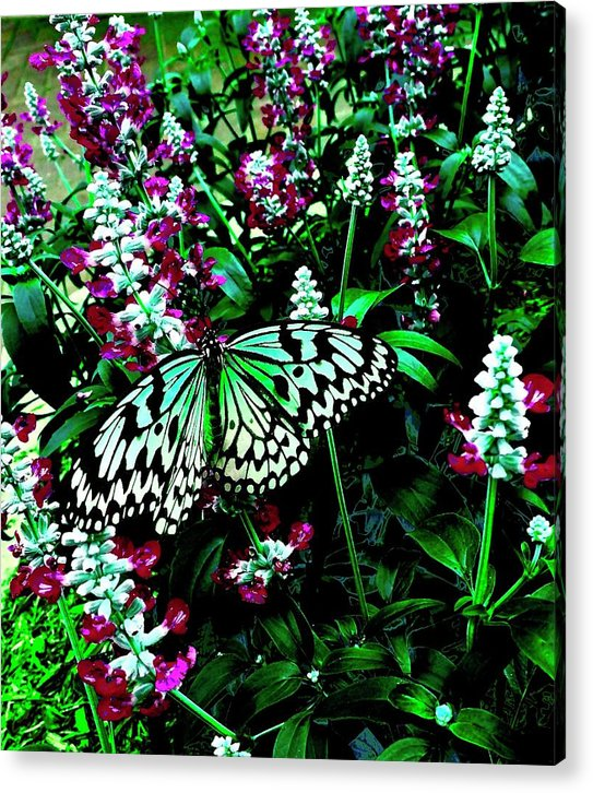 Butterfly - Acrylic Print