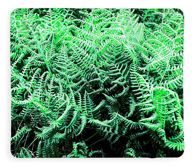 Fractal Ferns - Blanket
