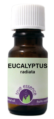 Branching Out - True Essence Essential Oil - Eucalyptus