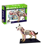 4D Vision Dog Educational Anatomy Model Veterinary Teaching