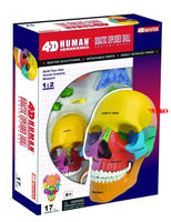 4D Puzzle Anatomical Didactic Exploded Beauchene Skull Color Human 1:2 Anatomy