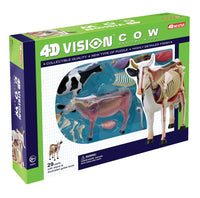 4D Vision Cow Anatomy Veterinary Education Model