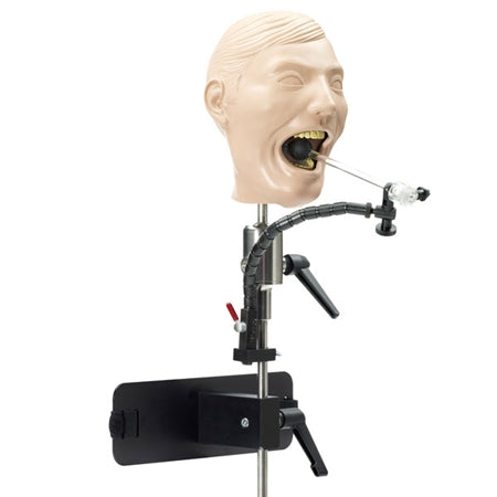 Dental Adult X-Ray Manikin with Mounting Pole and Dentoform