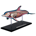 Dolphin 4D Veterinary Marine Life Model