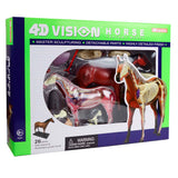 4D Vision Horse Anatomy Model Veterinary Teaching