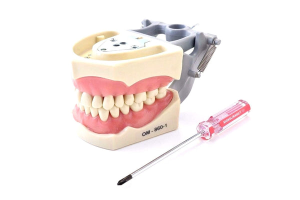 Dental Typodont Model 860 with Columbia Removable Teeth