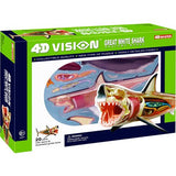4D Vision Great White Shark Anatomy Education Model