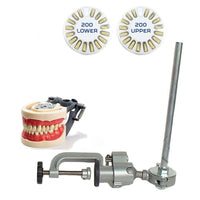 Dental Typodont Model 200, Mounting Pole and Teeth Set Type with Removable Teeth