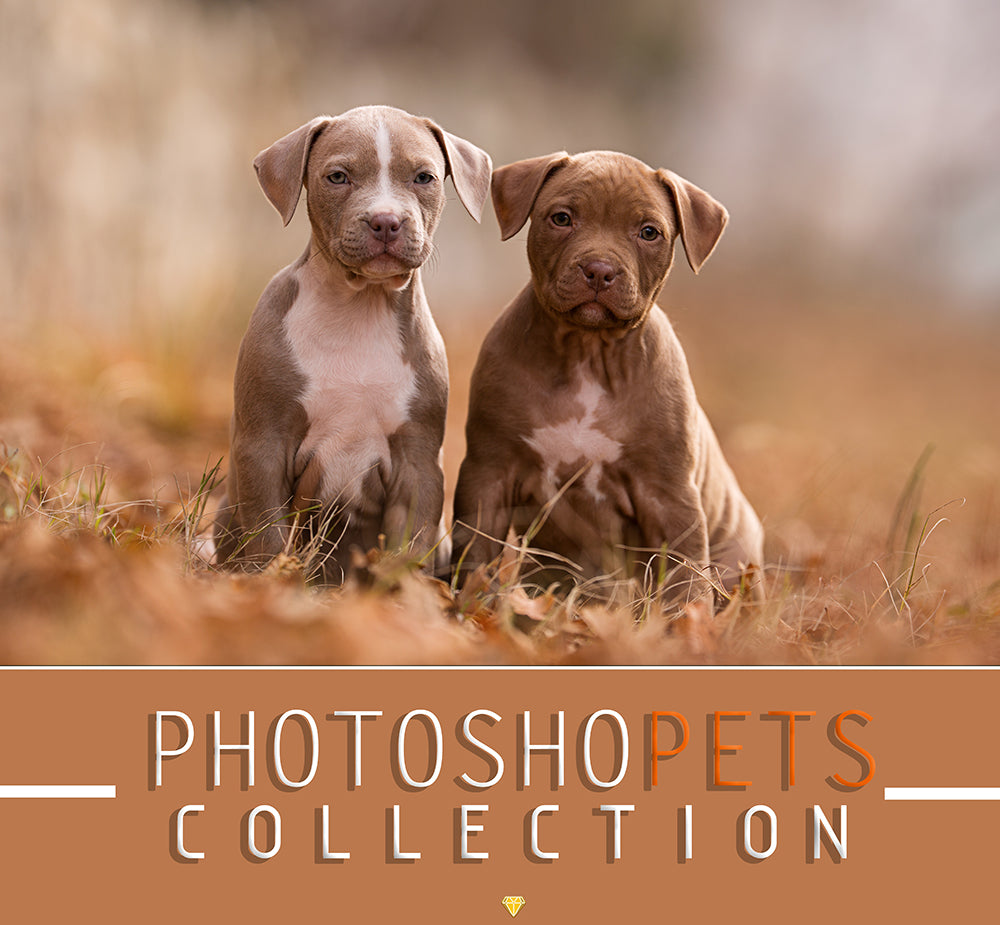 PHOTOSHOPETS ♢ COLLECTION