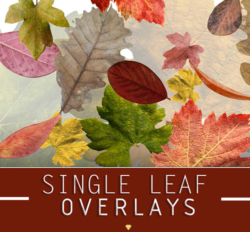 SINGLE LEAF ♢ OVERLAYS