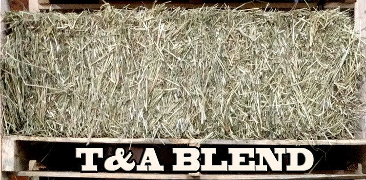 Timothy and Alfalfa Blend Hay