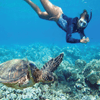 Best turtle tours in Hawaii | Waikiki Tours and Rentals