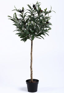 Potted Olive Tree Topiary