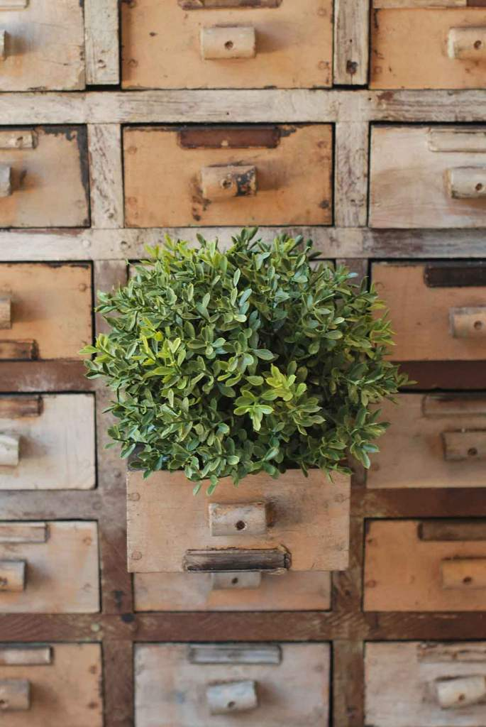 New England Boxwood Half Sphere