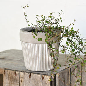 Cold Cast Cake Pot