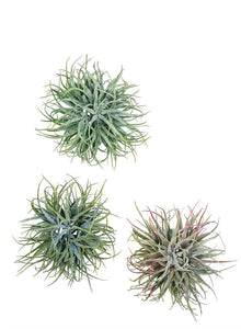 Faux Air Plant by The Feathered Farmhouse