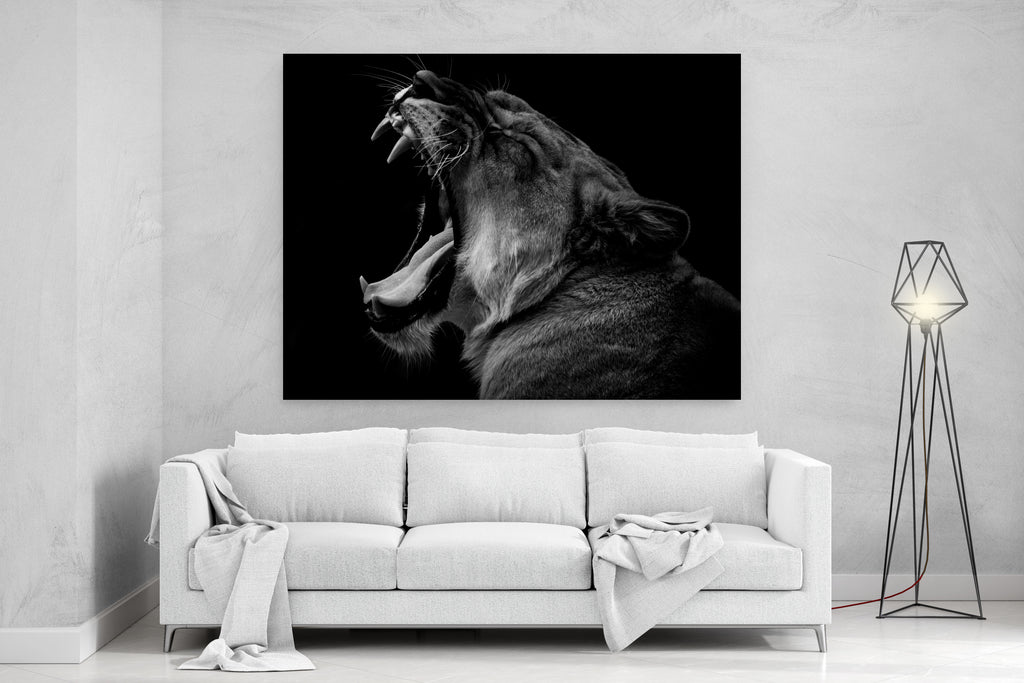 Black And White Lioness Canvas