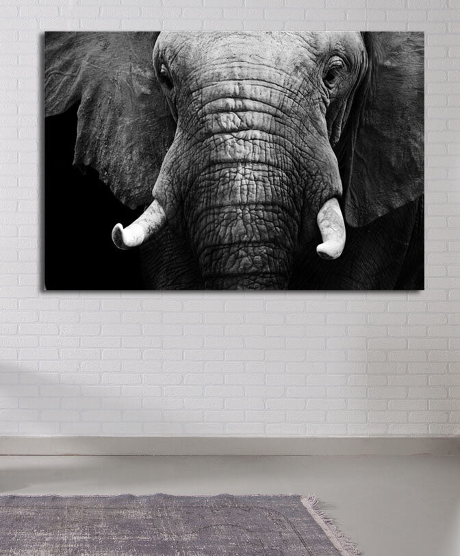 Black and White Elephant Canvas