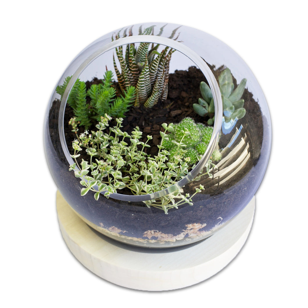 Terrarium Bowl (With wood base)