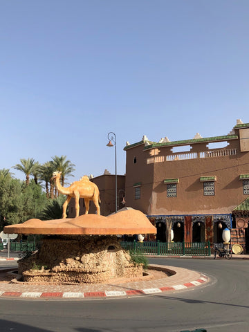 The Camel of Amazraou in the Zagora Province