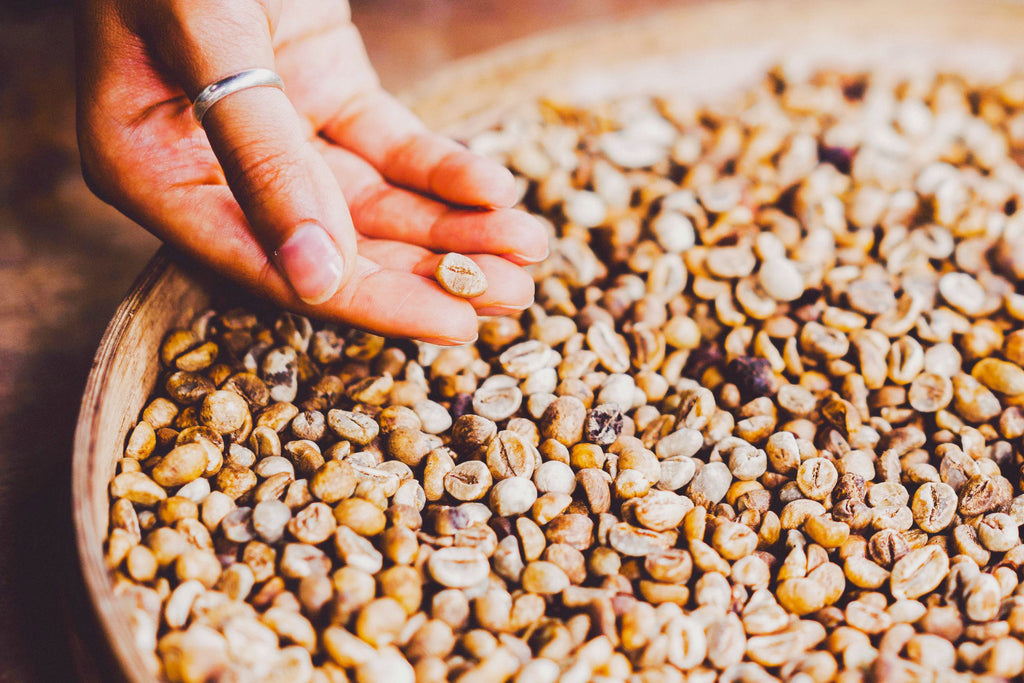 Where do we source our green coffee seed?