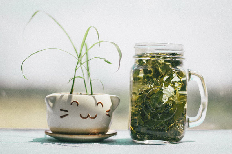 A Fоuntаin оf Yоuth: Green tea, For Skin Care Benefit