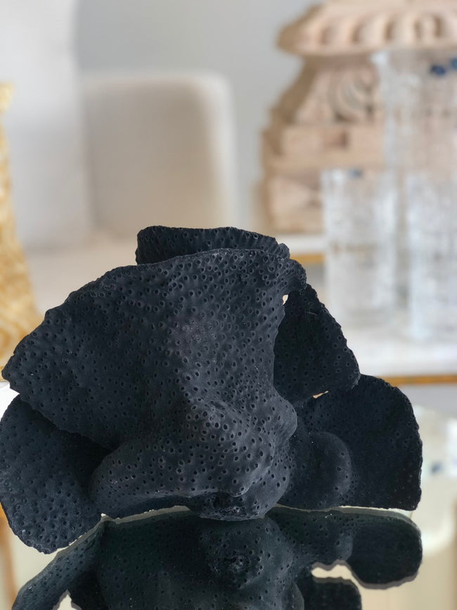 Black Coral Medium Turbin