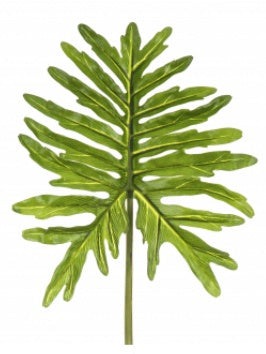 Philodendron Leaf 28x79cm Green