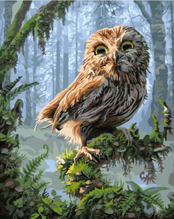 Paint By Numbers - Owl in the Forest