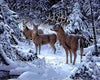 Paint by Numbers - Deer in Snowy Patch
