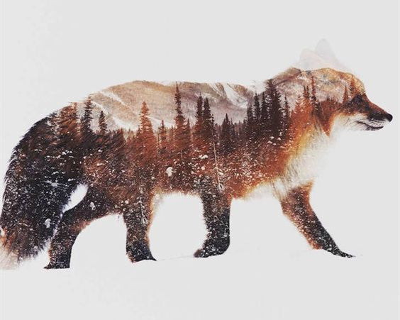 Paint By Numbers - Mountain Animals