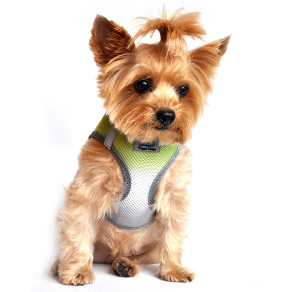 picture of dog wearing limestone gray dog harness
