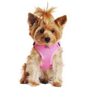 picture of a dog wearing a candy pink dog harness