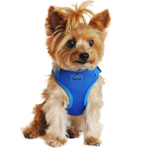picture of a dog wearing a cobalt blue dog harness