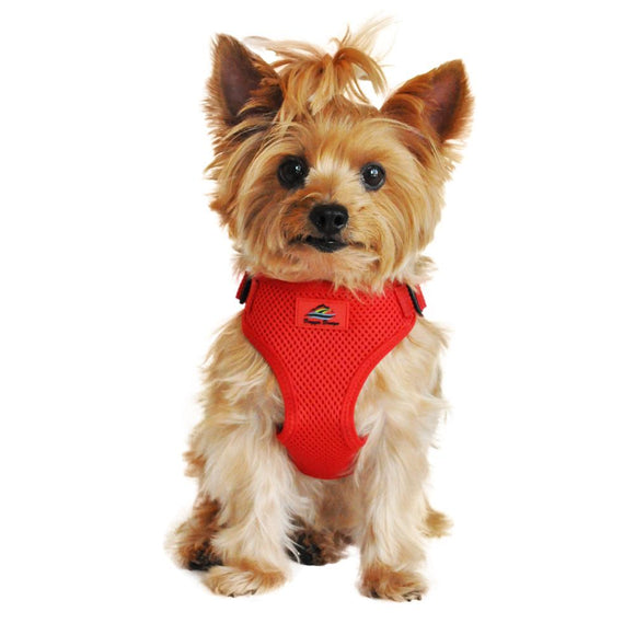 picture of a dog wearing a flame red dog harness