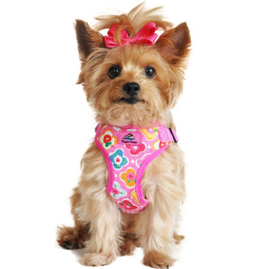 picture of a dog wearing a Maui pink