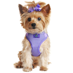 picture of a dog wearing a Paisley purple dog harness