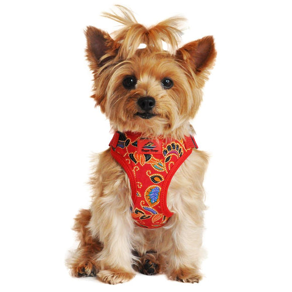 dog wearing a Tahiti red dog harness