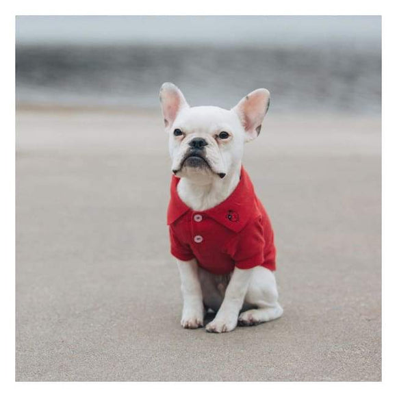Clothes - Solid Dog Polo Flame Scarlet Red Very Nice Looking.