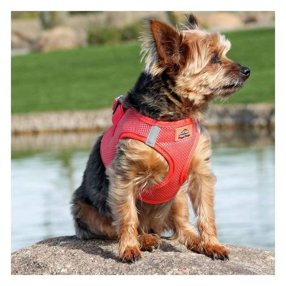 Dog Harness - Dog Harness American River Solid Ultra Choke Free Dog Harness Coral
